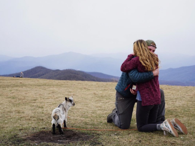 Goat Marriage Proposal