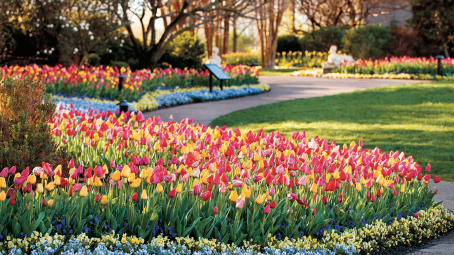 Tennessee: Cheekwood Estate and Gardens in Nashville