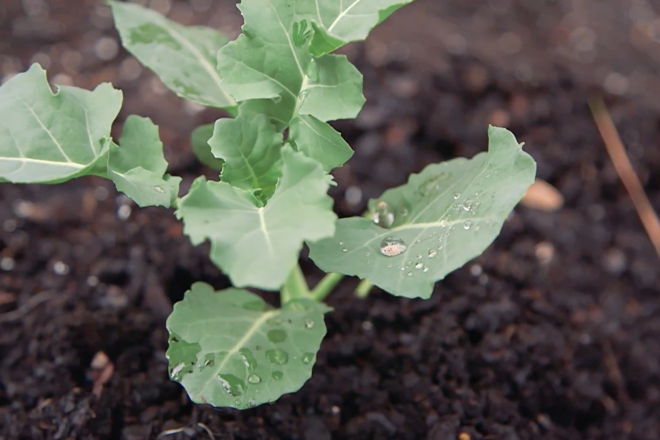 The Beginner's Guide to Vegetable and Herb Gardening