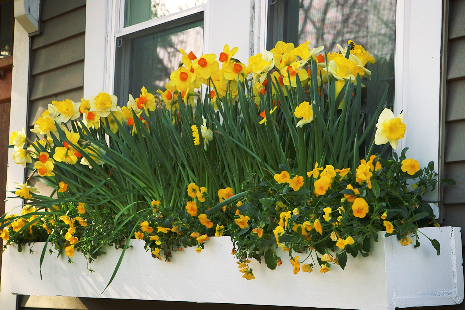 How To Build Window Box Planters