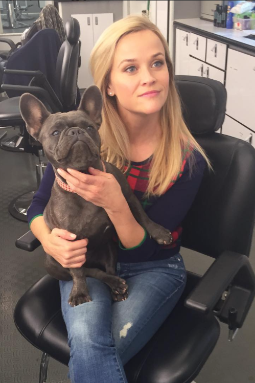 Pepper the Dog Behind the Scenes in Hair and Makeup