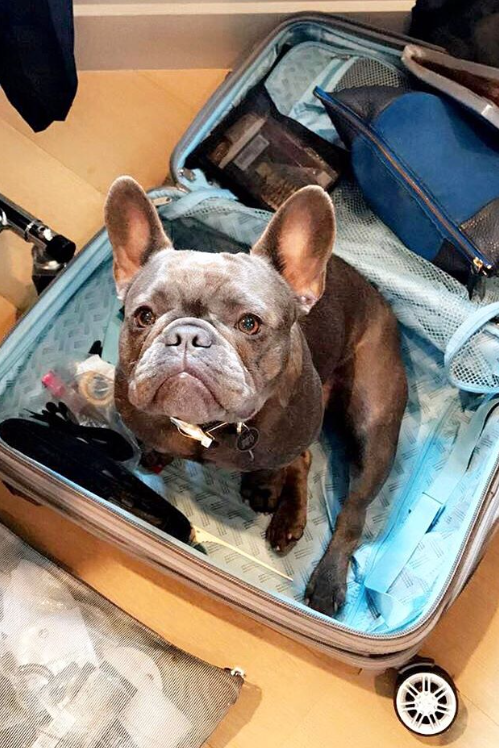 Pepper the Dog Packs Reese's Suitcase