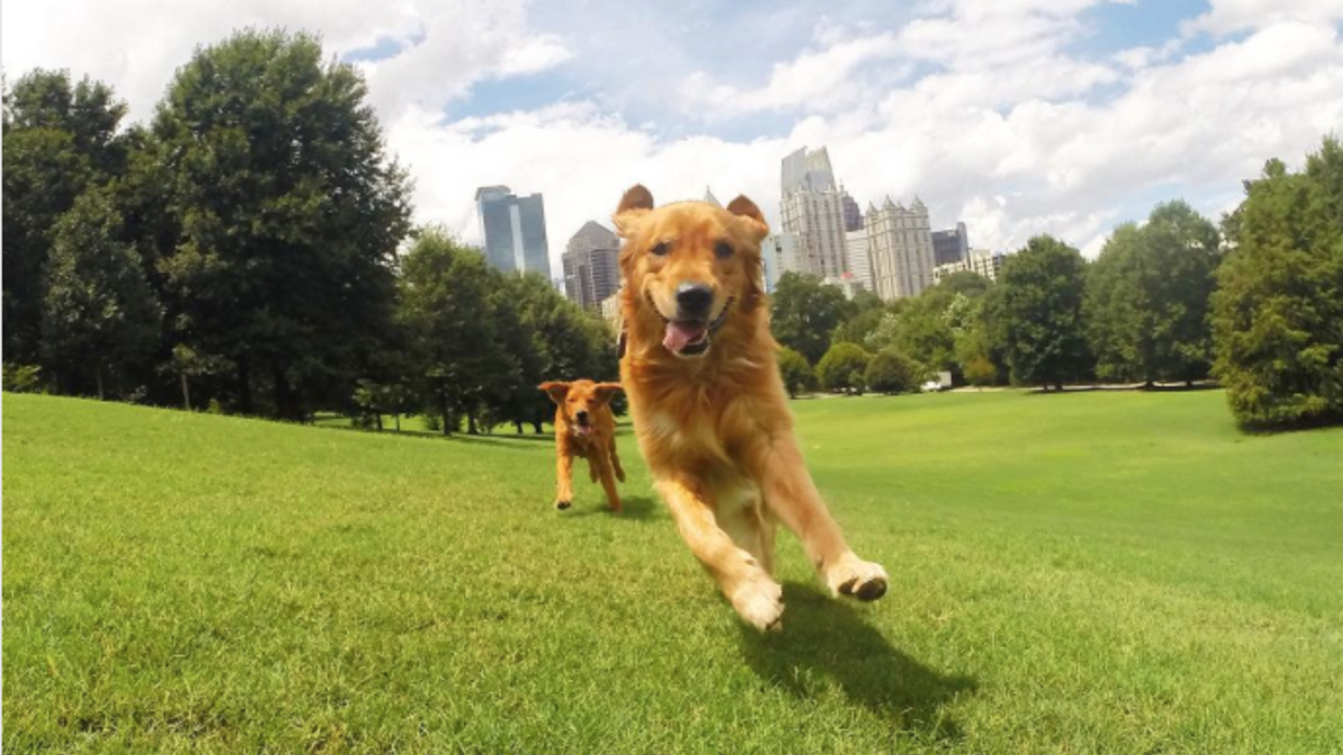 Dog-Friendly Spots in Atlanta Worth Wagging About