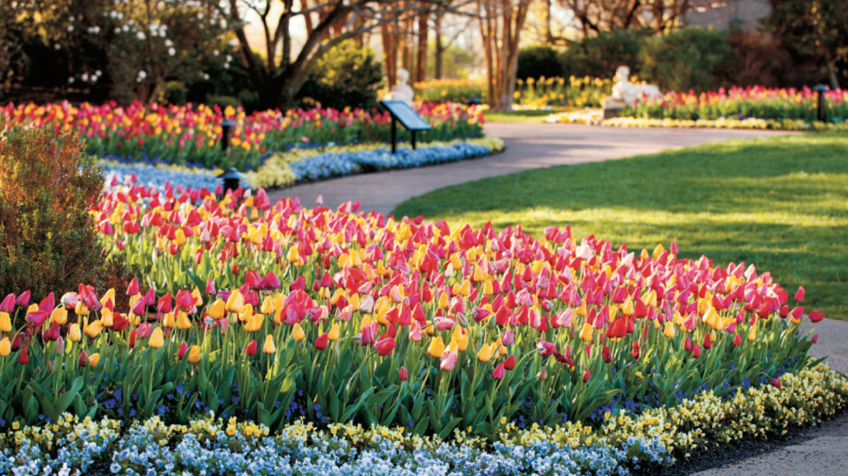 The Best Places To See Stunning Spring Blooms Across the South
